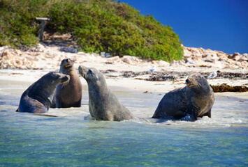 SEAL ISLAND WILDLIFE CRUISES